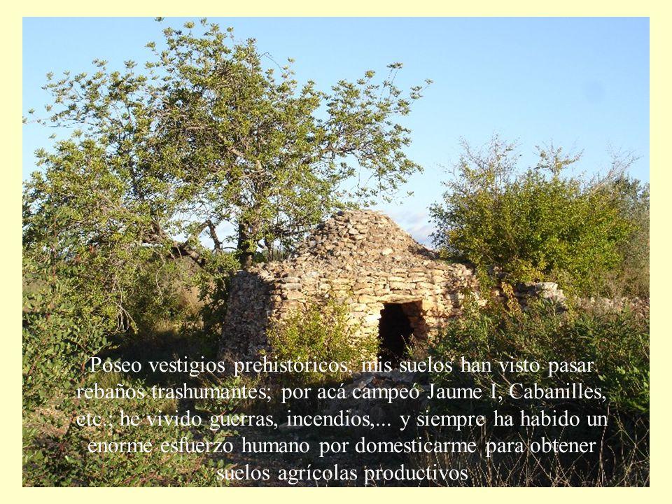 Poseo vestigios prehistóricos; mis suelos han visto pasar rebaños trashumantes; por acá campeó Jaume I, Cabanilles, etc.; he vivido guerras, incendios,...