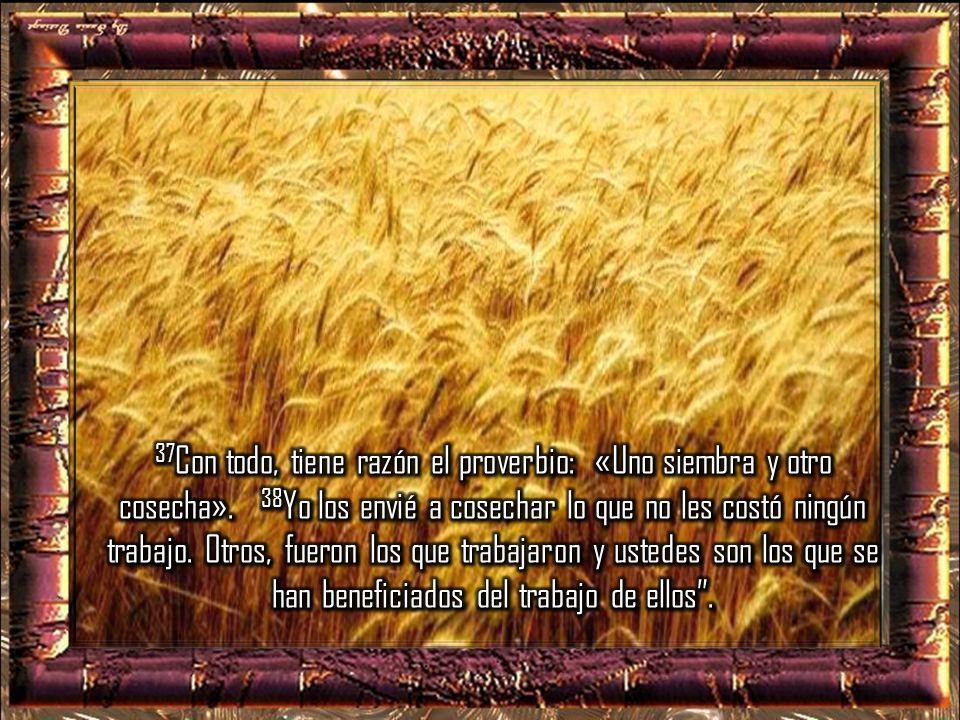 37Con todo, tiene razón el proverbio: «Uno siembra y otro cosecha»