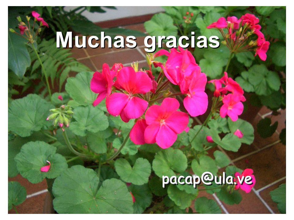 Muchas gracias pacap@ula.ve