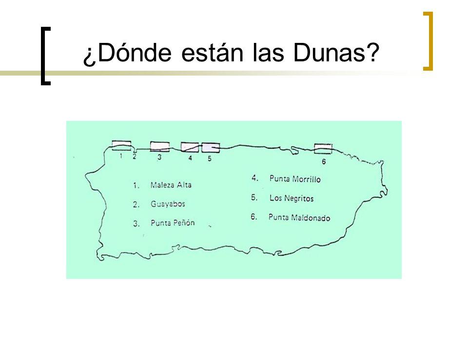 ¿Dónde están las Dunas