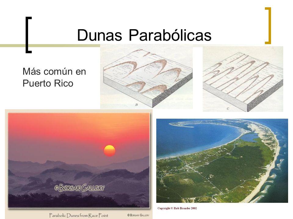 Dunas Parabólicas Más común en Puerto Rico