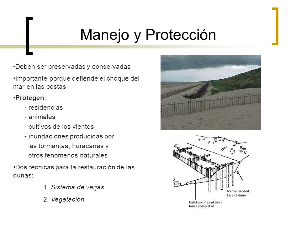Manejo y Protección •Deben ser preservadas y conservadas