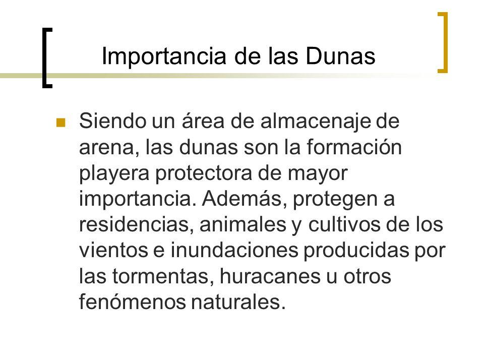 Importancia de las Dunas
