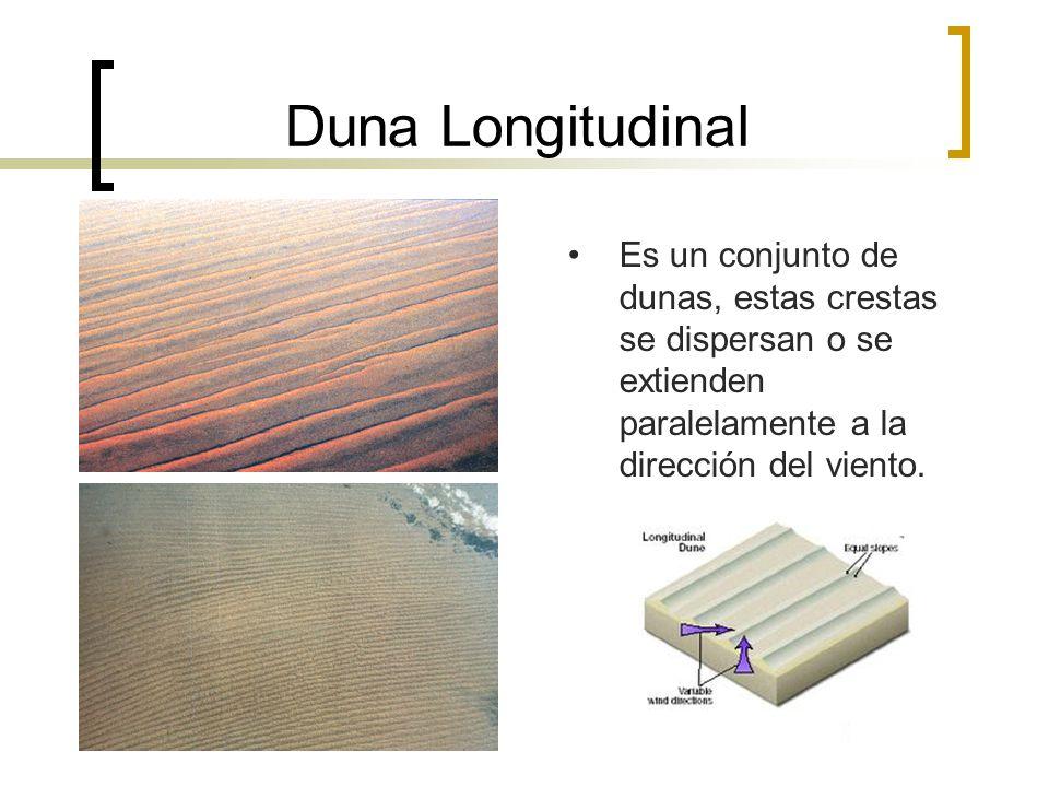 Duna Longitudinal Es un conjunto de dunas, estas crestas se dispersan o se extienden paralelamente a la dirección del viento.