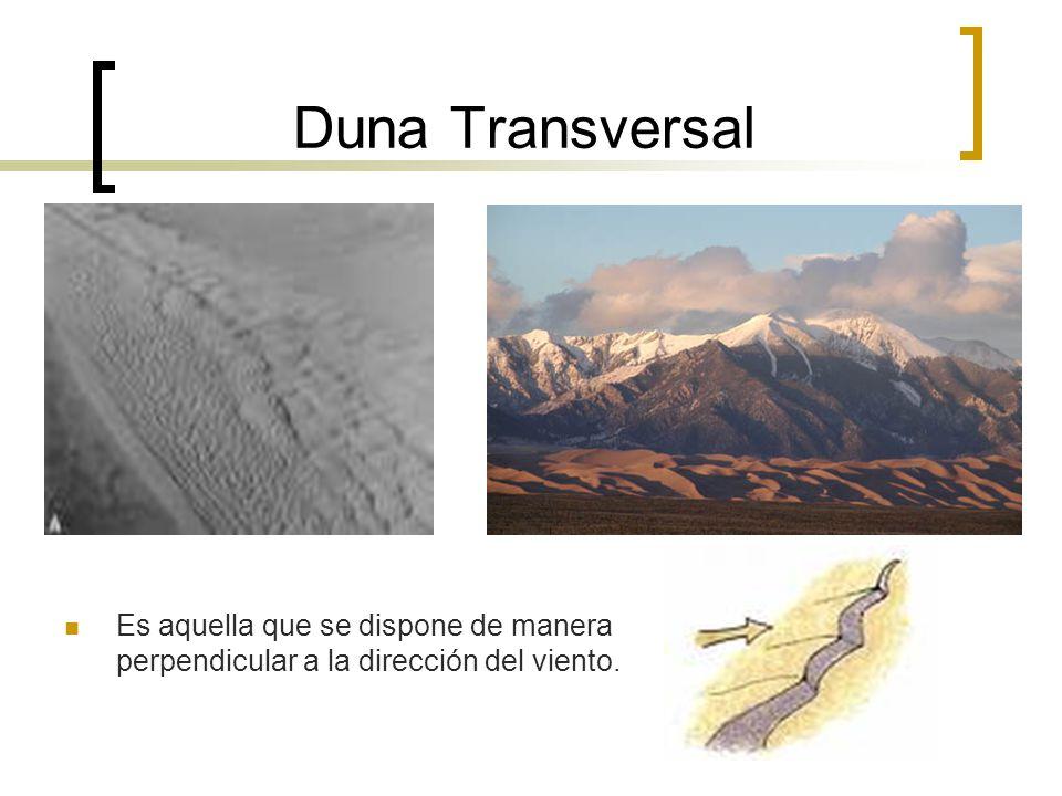 Duna Transversal Es aquella que se dispone de manera perpendicular a la dirección del viento.
