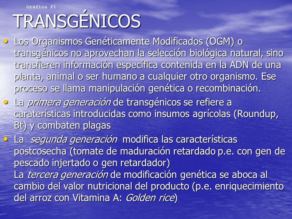 Gráfica 21 TRANSGÉNICOS.