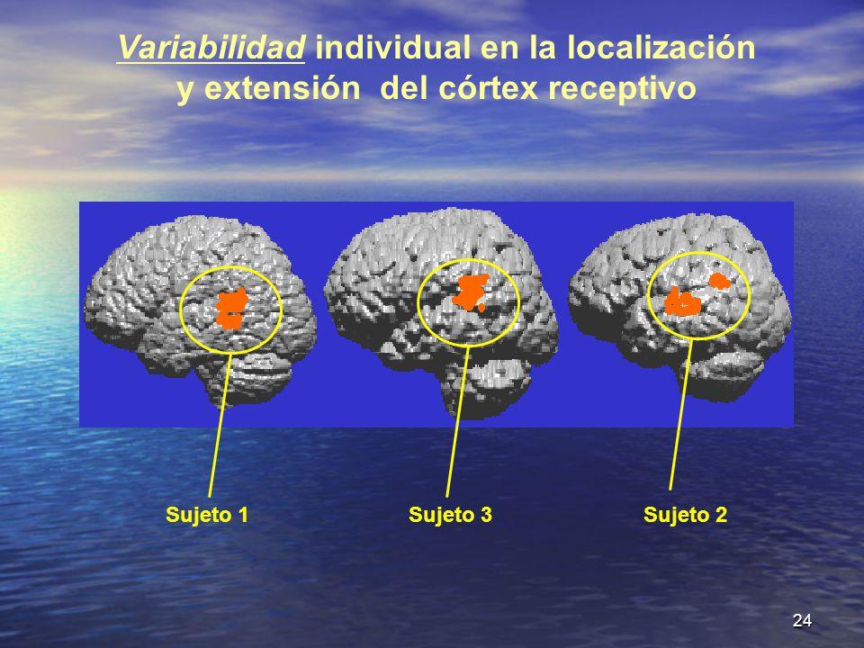 Variabilidad individual en la localización y extensión del córtex receptivo
