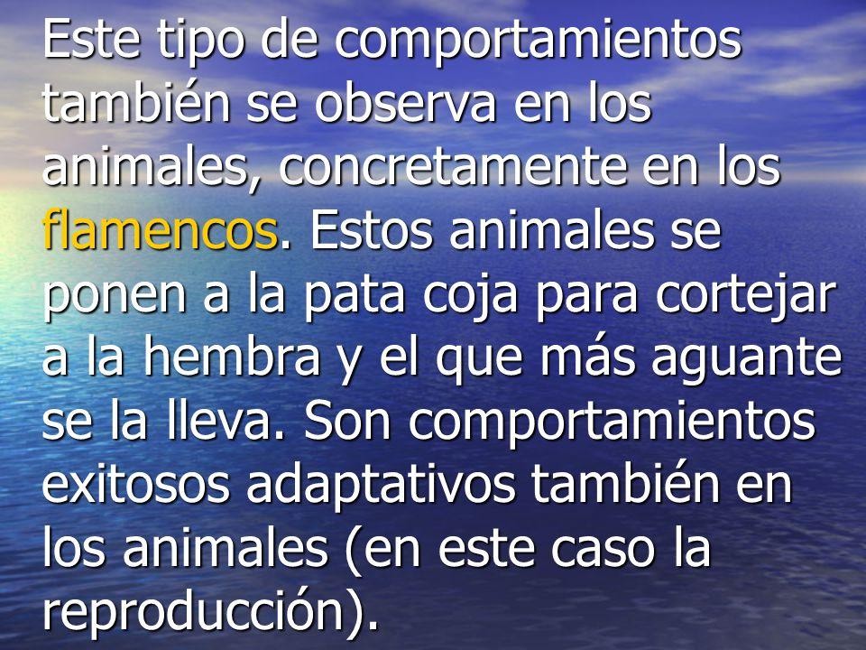 Este tipo de comportamientos también se observa en los animales, concretamente en los flamencos.