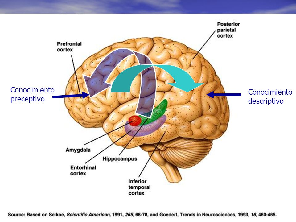 Conocimiento Conocimiento preceptivo descriptivo