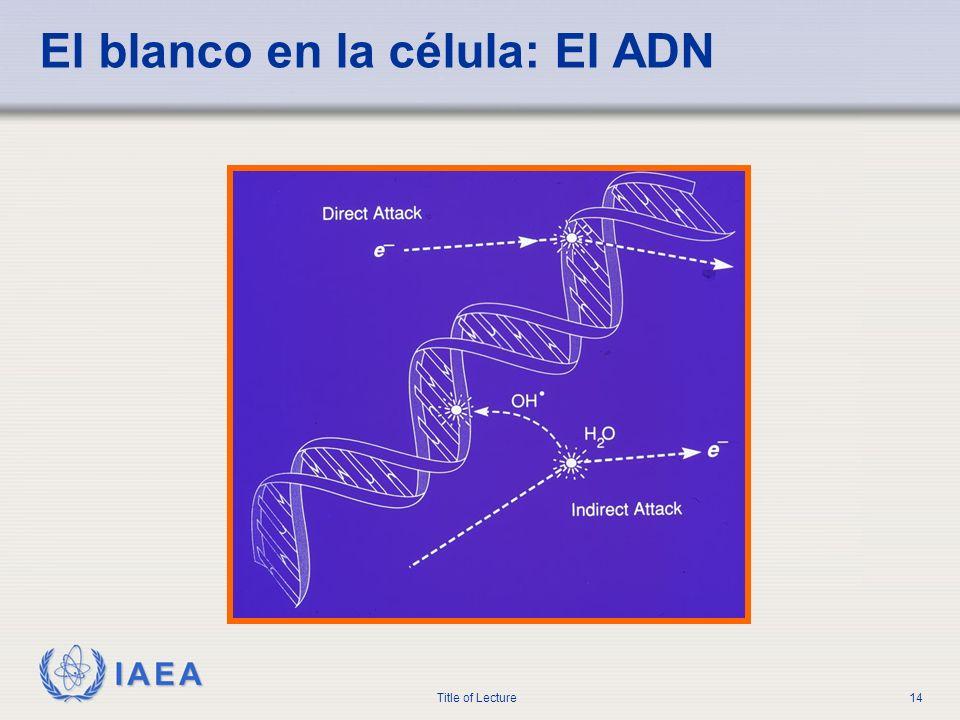 El blanco en la célula: El ADN