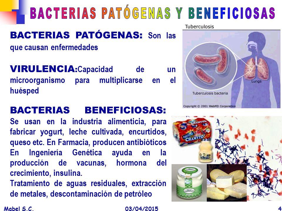BACTERIAS PATÓGENAS Y BENEFICIOSAS