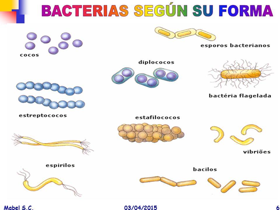 BACTERIAS SEGÚN SU FORMA
