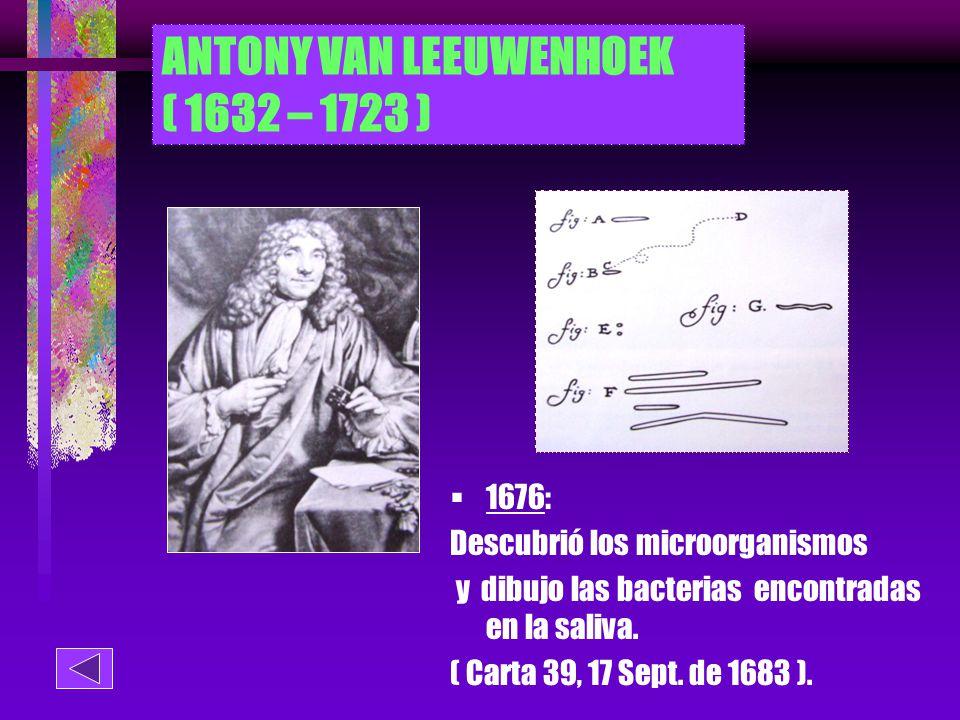 ANTONY VAN LEEUWENHOEK ( 1632 – 1723 )