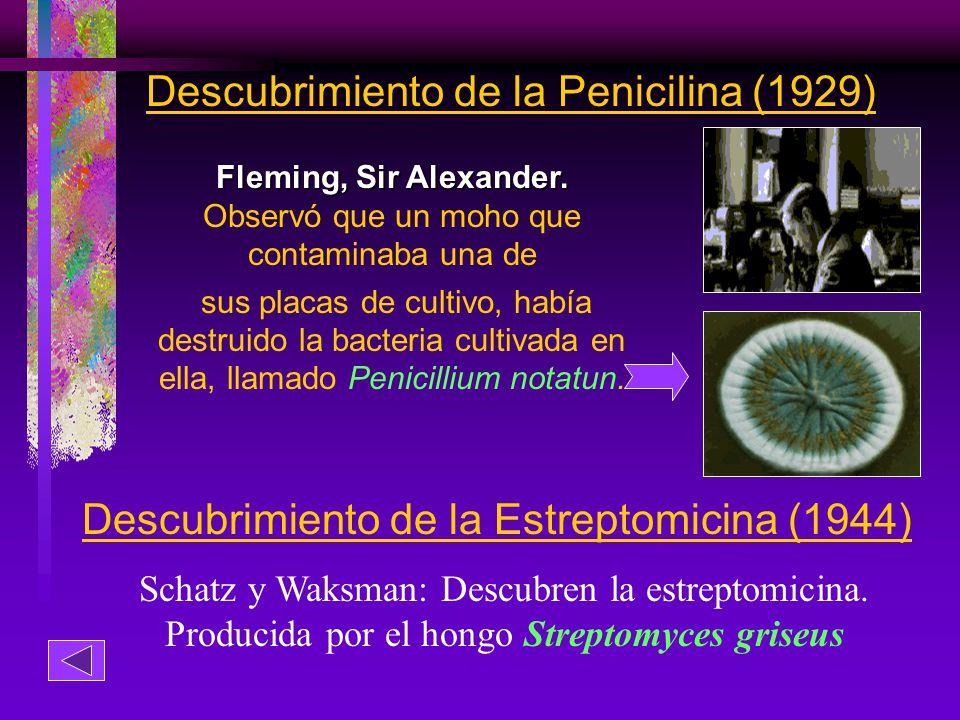 Descubrimiento de la Penicilina (1929)
