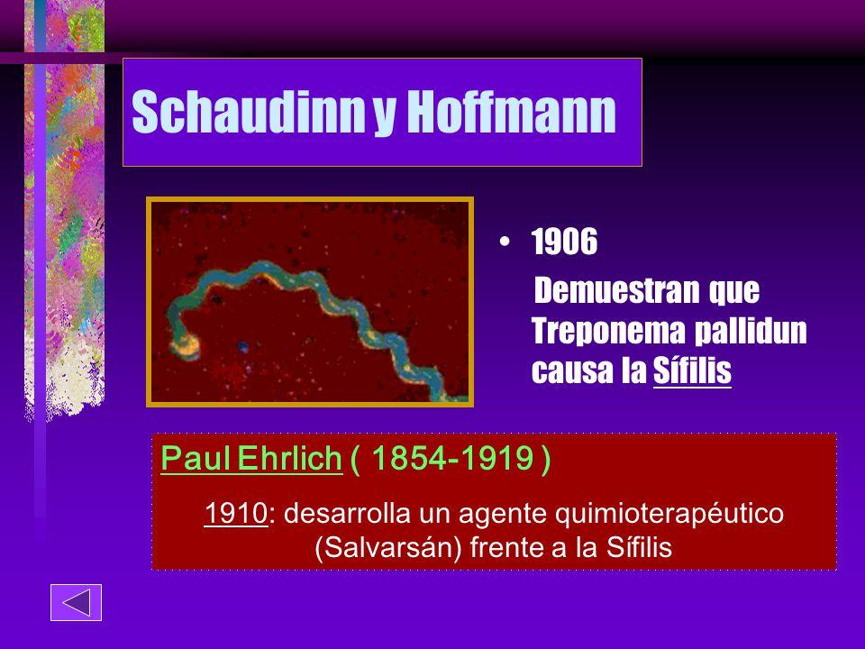 Schaudinn y Hoffmann 1906. Demuestran que Treponema pallidun causa la Sífilis. Paul Ehrlich ( 1854-1919 )