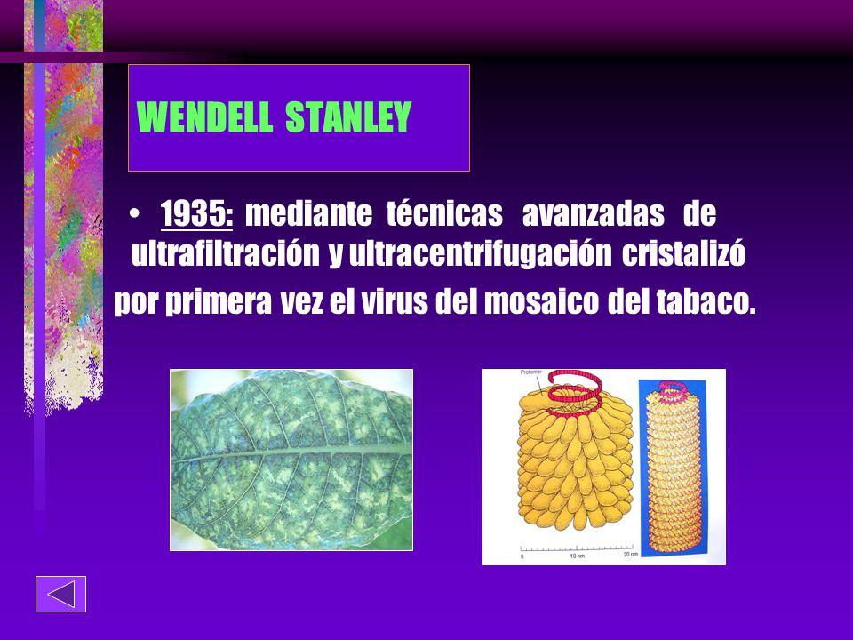 por primera vez el virus del mosaico del tabaco.