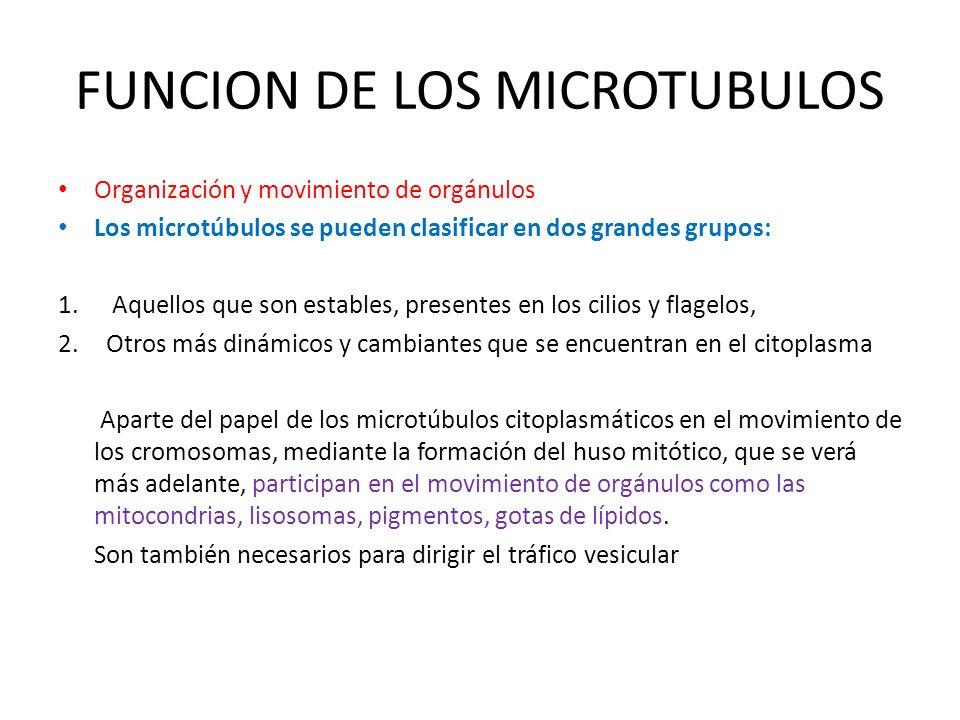 FUNCION DE LOS MICROTUBULOS