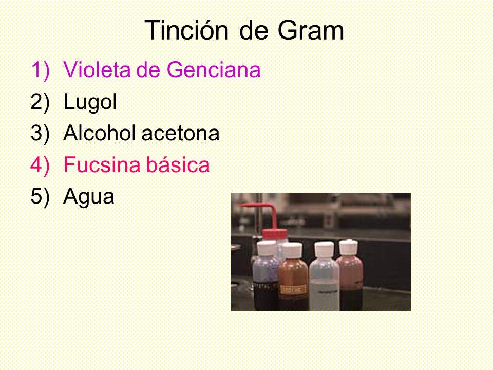 Tinción de Gram Violeta de Genciana Lugol Alcohol acetona