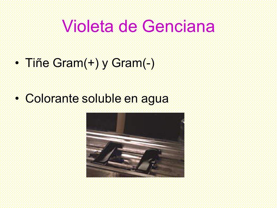 Violeta de Genciana Tiñe Gram(+) y Gram(-) Colorante soluble en agua