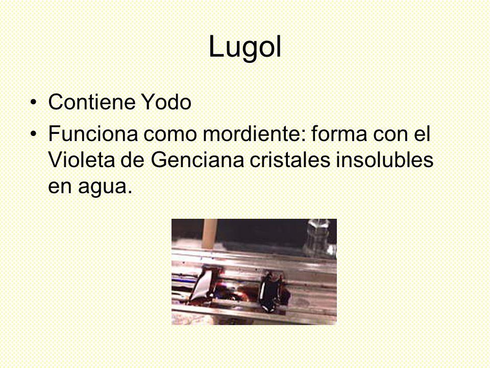 Lugol Contiene Yodo.