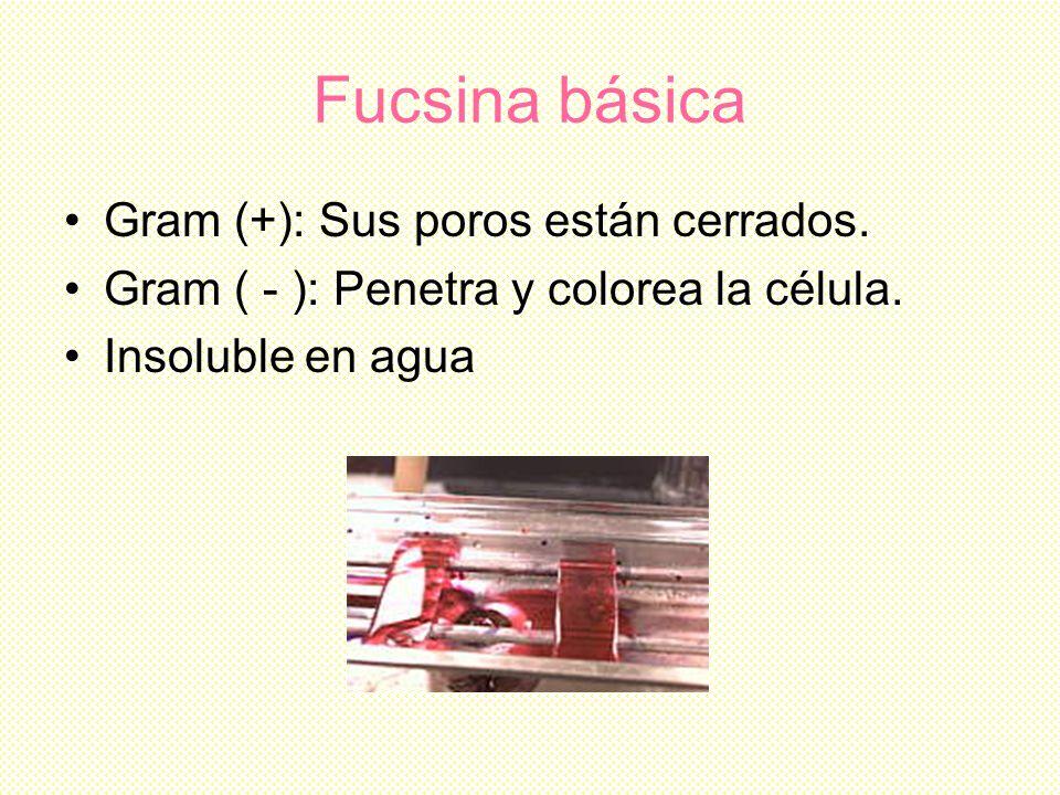 Fucsina básica Gram (+): Sus poros están cerrados.