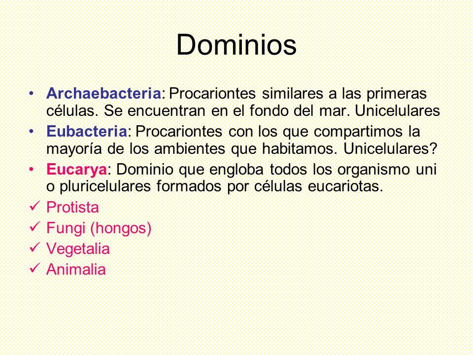 Dominios Archaebacteria: Procariontes similares a las primeras células. Se encuentran en el fondo del mar. Unicelulares.