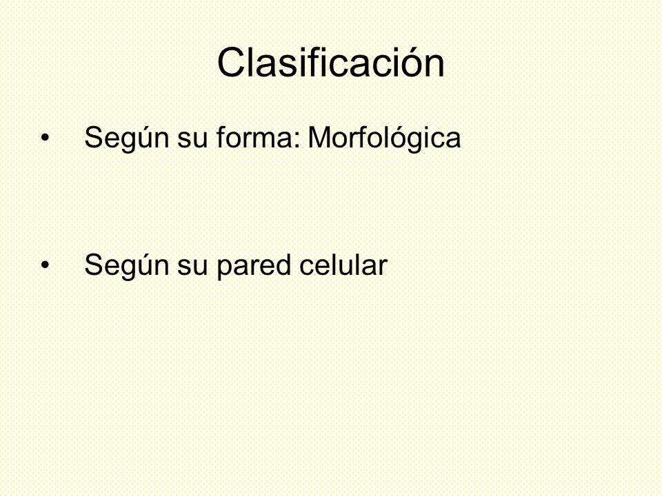 Clasificación Según su forma: Morfológica Según su pared celular