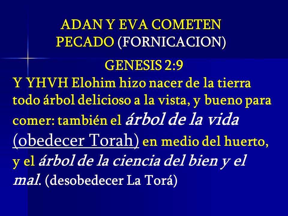 ADAN Y EVA COMETEN PECADO (FORNICACION) GENESIS 2:9.