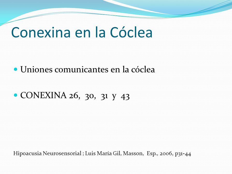 Conexina en la Cóclea Uniones comunicantes en la cóclea