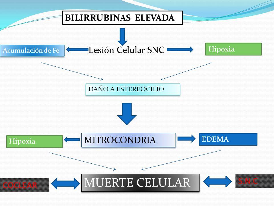 MUERTE CELULAR BILIRRUBINAS ELEVADA Lesión Celular SNC MITROCONDRIA