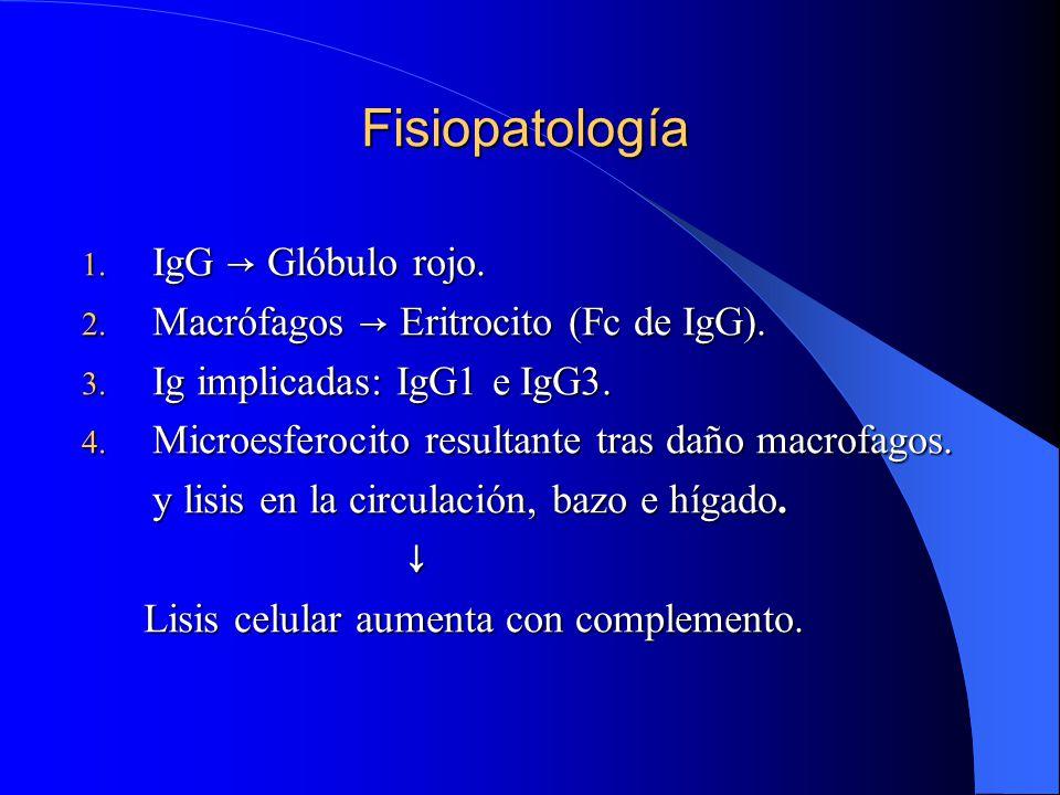 Fisiopatología IgG → Glóbulo rojo.