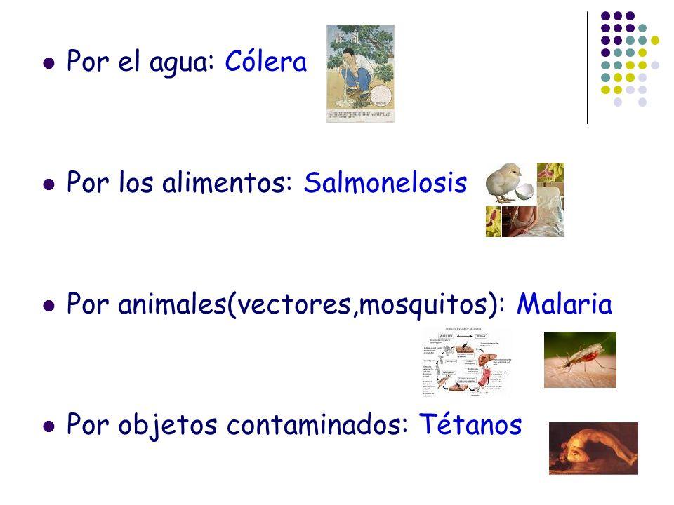 Por el agua: Cólera Por los alimentos: Salmonelosis.