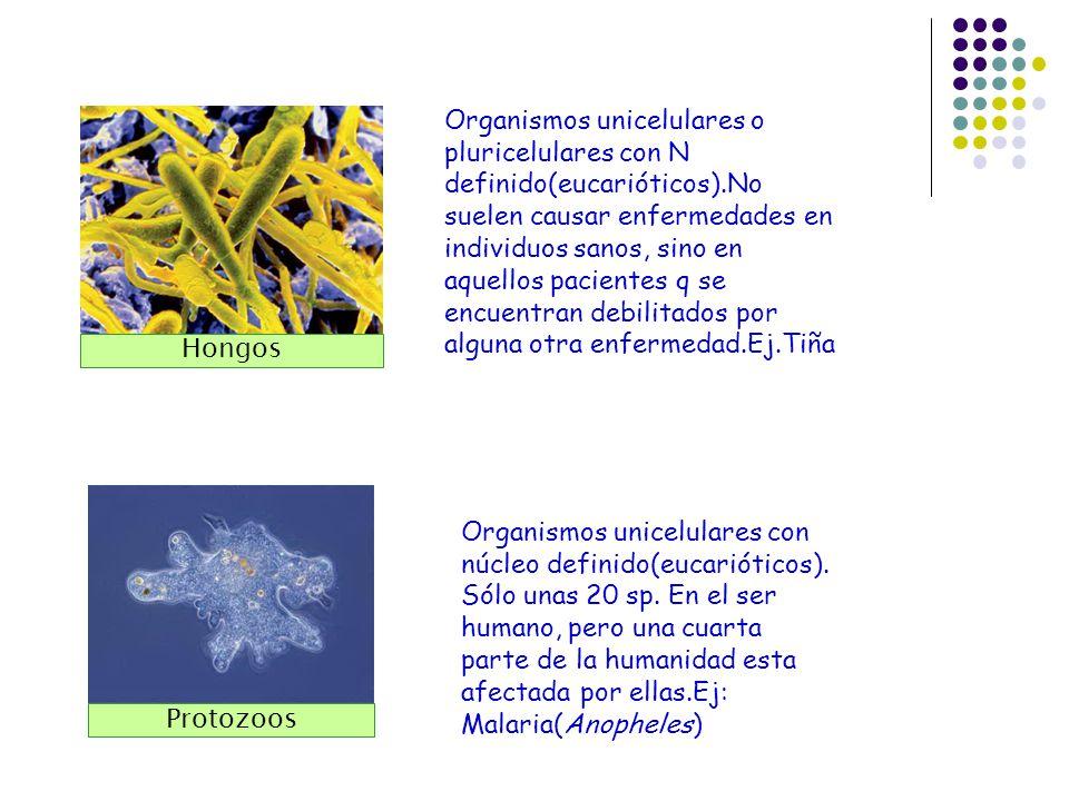 Organismos unicelulares o pluricelulares con N definido(eucarióticos)