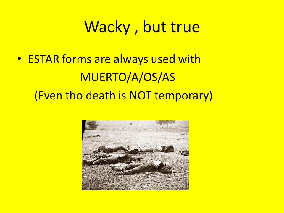 Wacky , but true ESTAR forms are always used with MUERTO/A/OS/AS