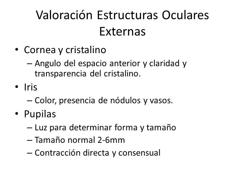 Valoración Estructuras Oculares Externas