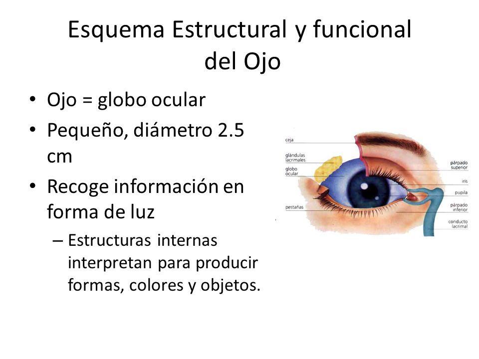 Esquema Estructural y funcional del Ojo