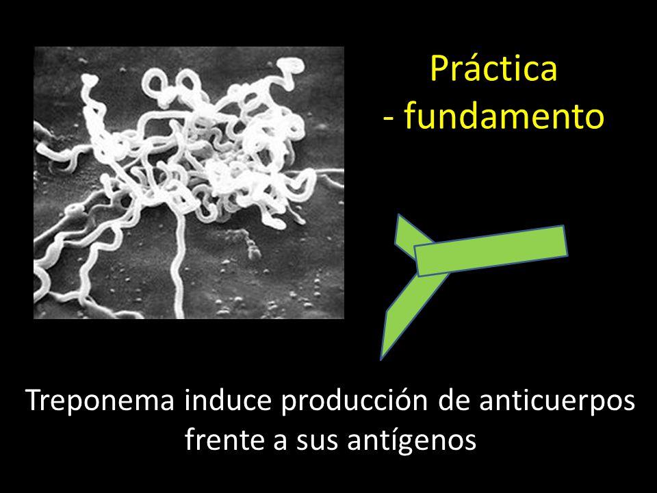 Treponema induce producción de anticuerpos