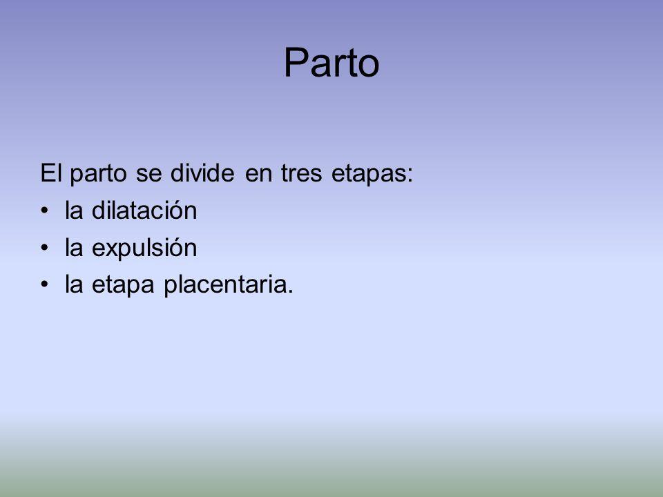 Parto El parto se divide en tres etapas: la dilatación la expulsión