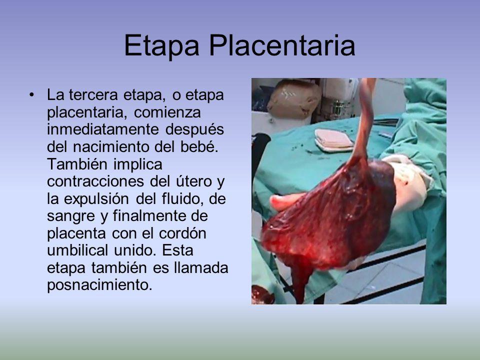 Etapa Placentaria