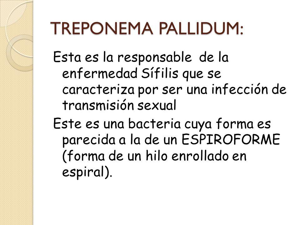 TREPONEMA PALLIDUM: