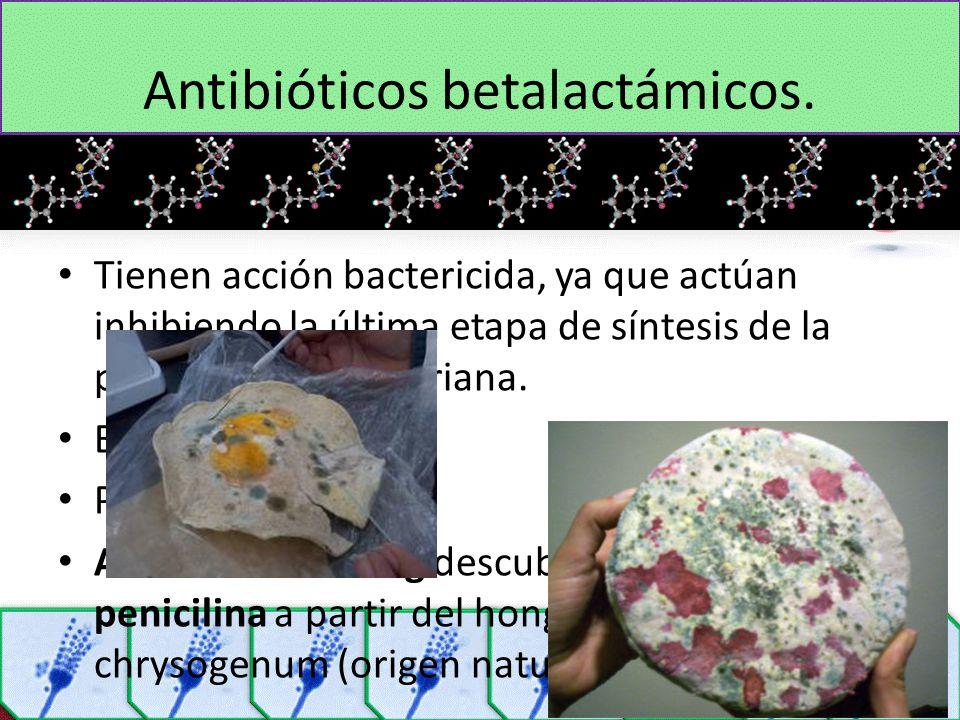 Antibióticos betalactámicos.