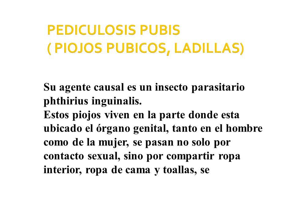 PEDICULOSIS PUBIS ( PIOJOS PUBICOS, LADILLAS)