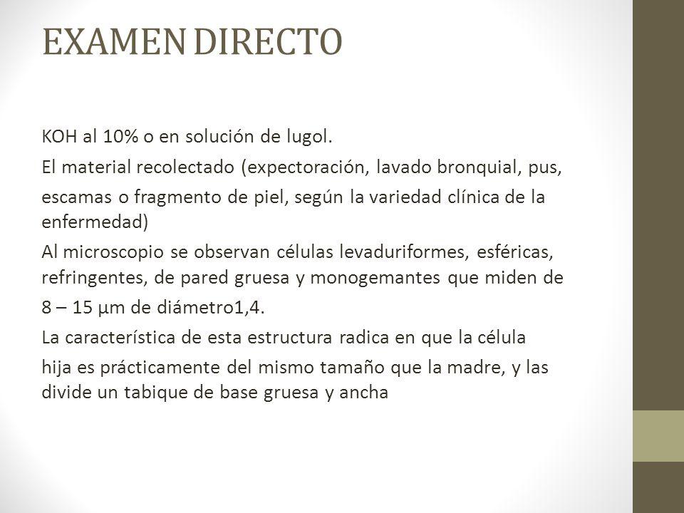 EXAMEN DIRECTO
