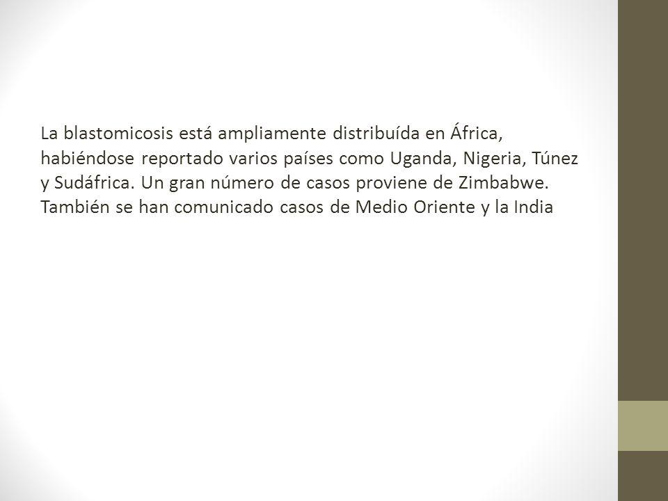 La blastomicosis está ampliamente distribuída en África, habiéndose reportado varios países como Uganda, Nigeria, Túnez y Sudáfrica.