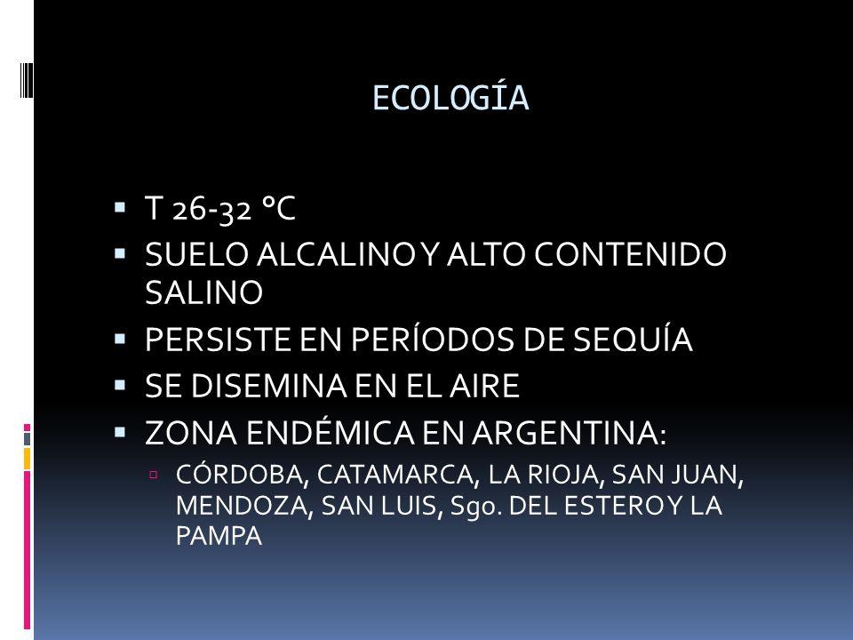 ECOLOGÍA T 26-32 °C SUELO ALCALINO Y ALTO CONTENIDO SALINO