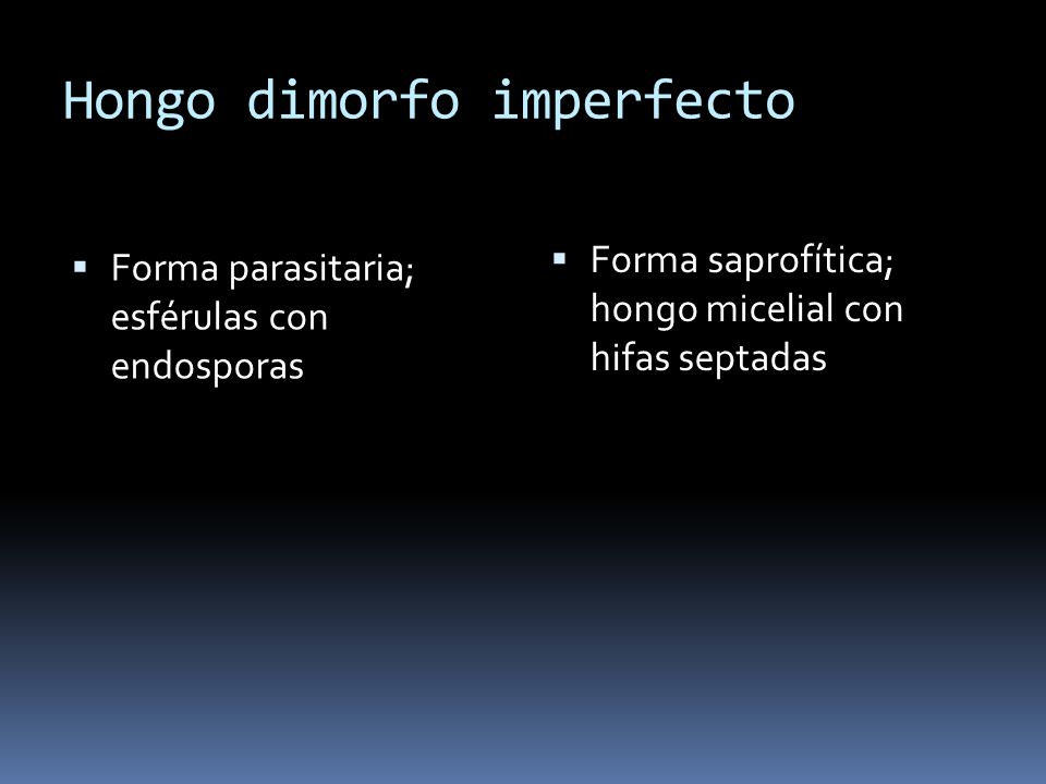 Hongo dimorfo imperfecto