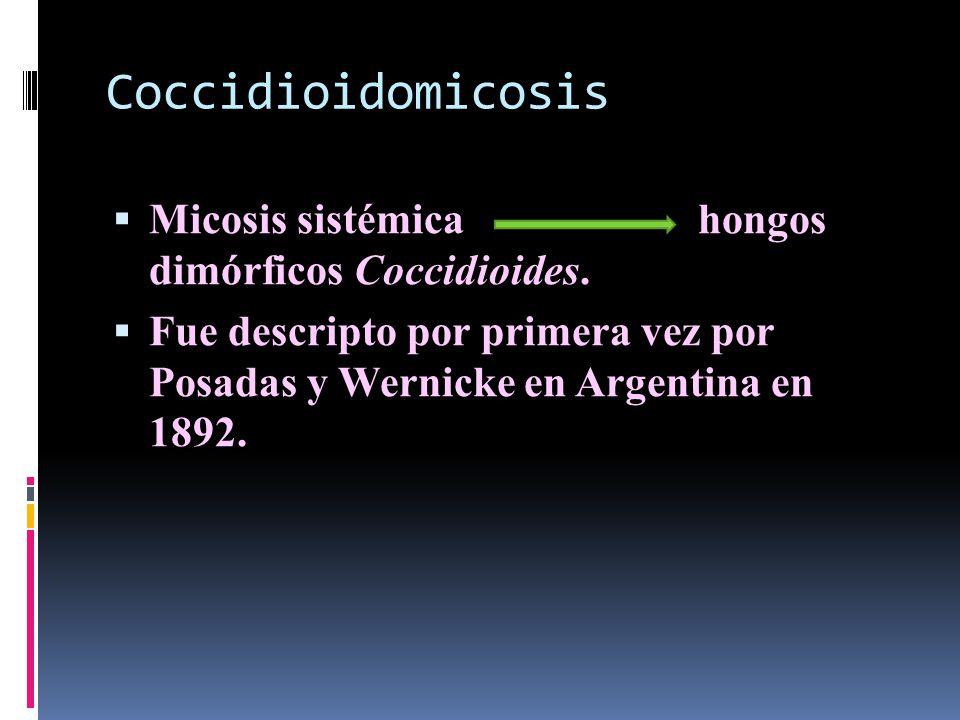 Coccidioidomicosis Micosis sistémica hongos dimórficos Coccidioides.