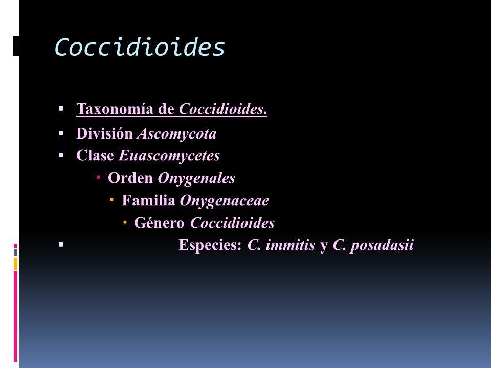 Coccidioides Taxonomía de Coccidioides. División Ascomycota