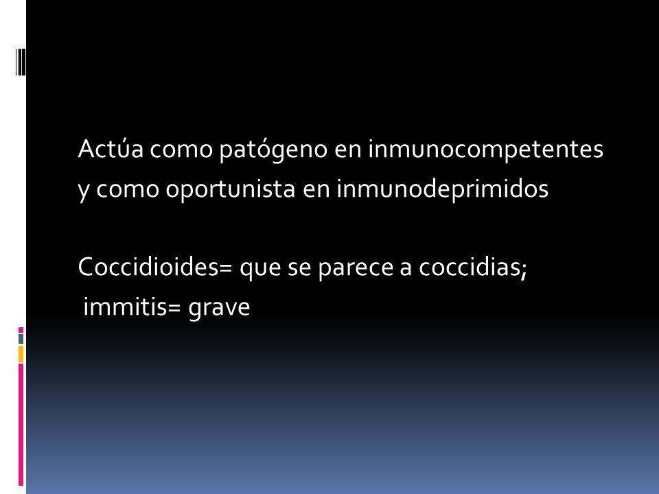 Actúa como patógeno en inmunocompetentes y como oportunista en inmunodeprimidos Coccidioides= que se parece a coccidias; immitis= grave