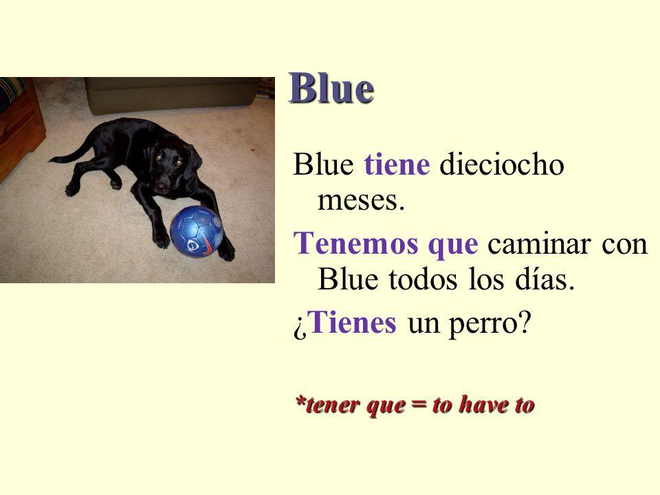 Blue Blue tiene dieciocho meses.